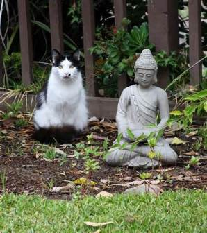 "Kitty says ""Be zen."""