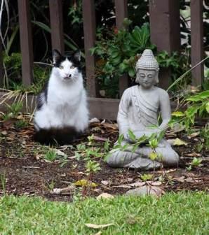 """Kitty says """"Be zen."""""""